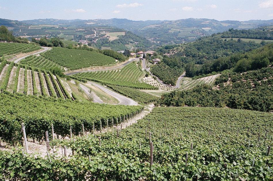 Piedmont Vineyards.JPG