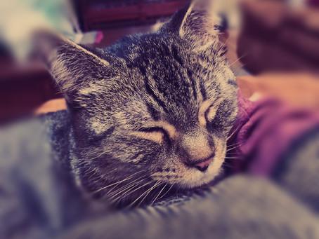 Foster Kitties and the Gospel