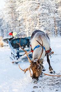 Lapland 4kids 2.jpg