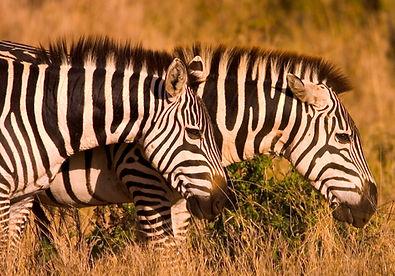The Safari and Conservation Company - Bo