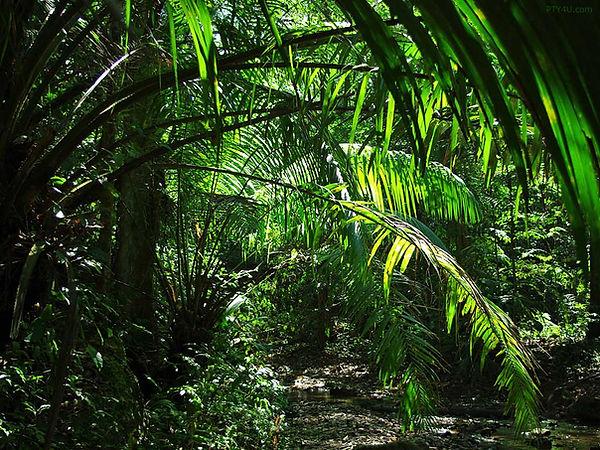 nam jungle.jpg