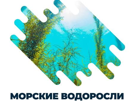 Морски водорасли-тайно здраве и красота!