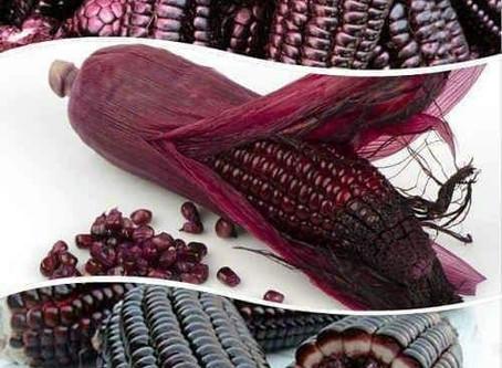 Тайната на успеха в отглеждането на царевица