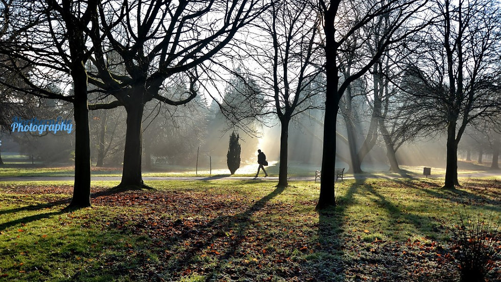 812107  Dawn at Ormeau Park Belfast