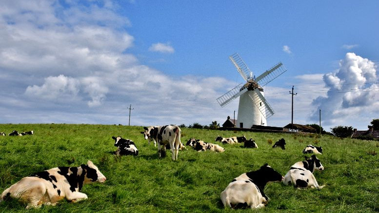 812170 Ballycopeland Windmill with Friends