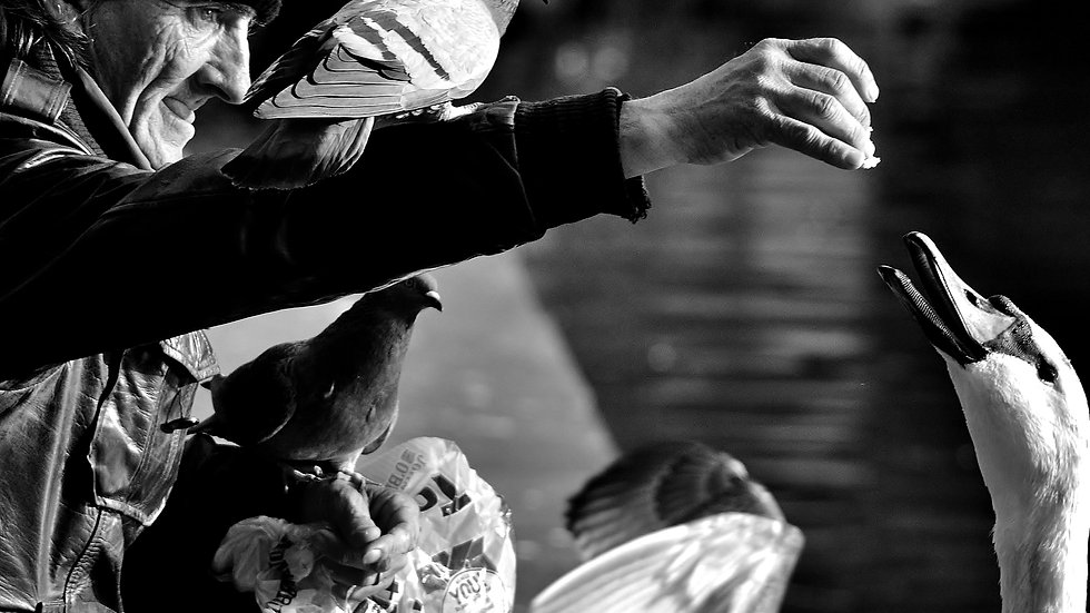 812104 Birdman of Dublin