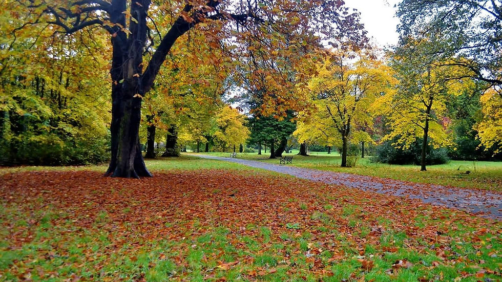 812122 Autumn at the Park Belfast