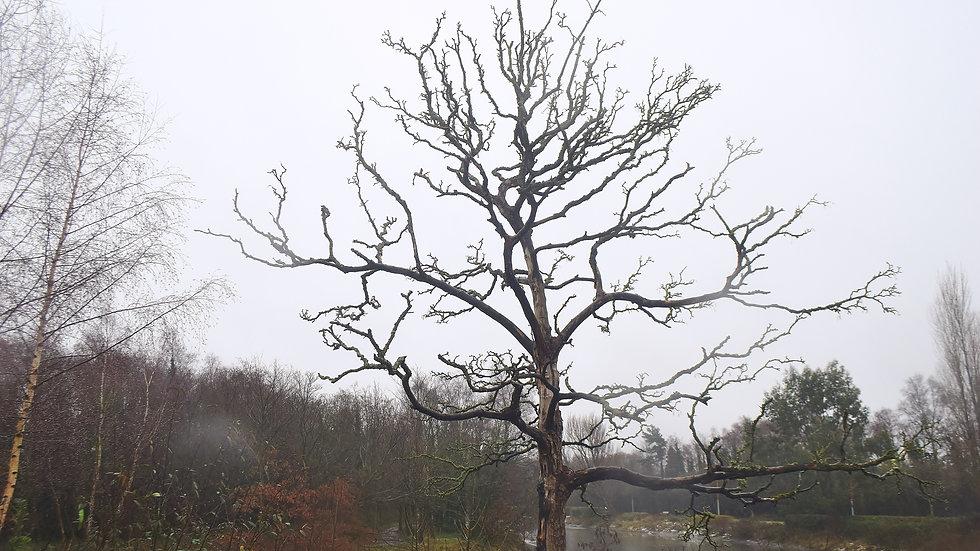 812138 Water Tree