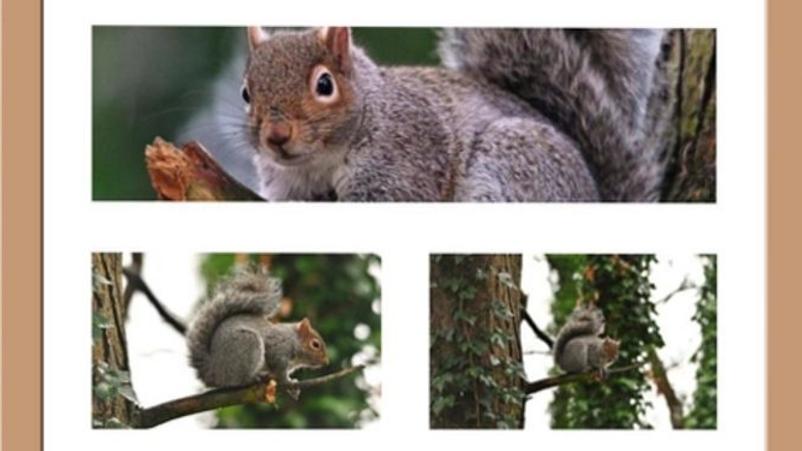 812181 Triple Squirrel