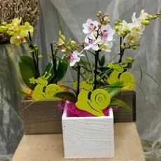 Orchidee Phalenopsis mit Vase