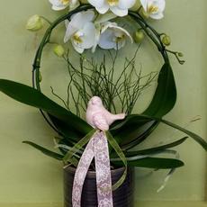 Weiße Orchidee mit Vase und Vögelchen