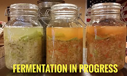 Fermentation in progress.jpeg