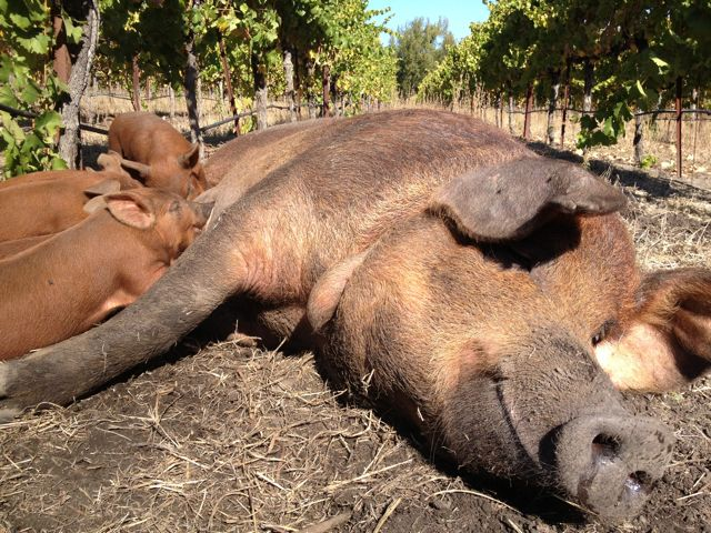 Feeding in the Vineyards