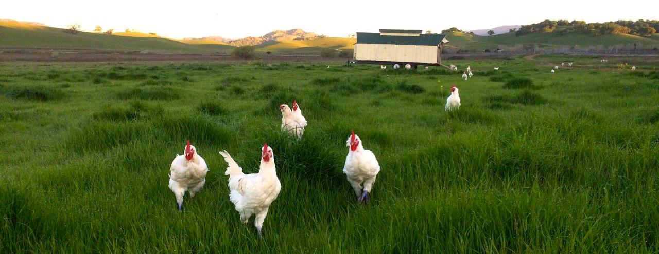 Napa Grass Farmer