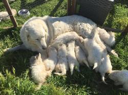 17 Puppies