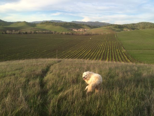 Pasture and Vineyards... Beautiful