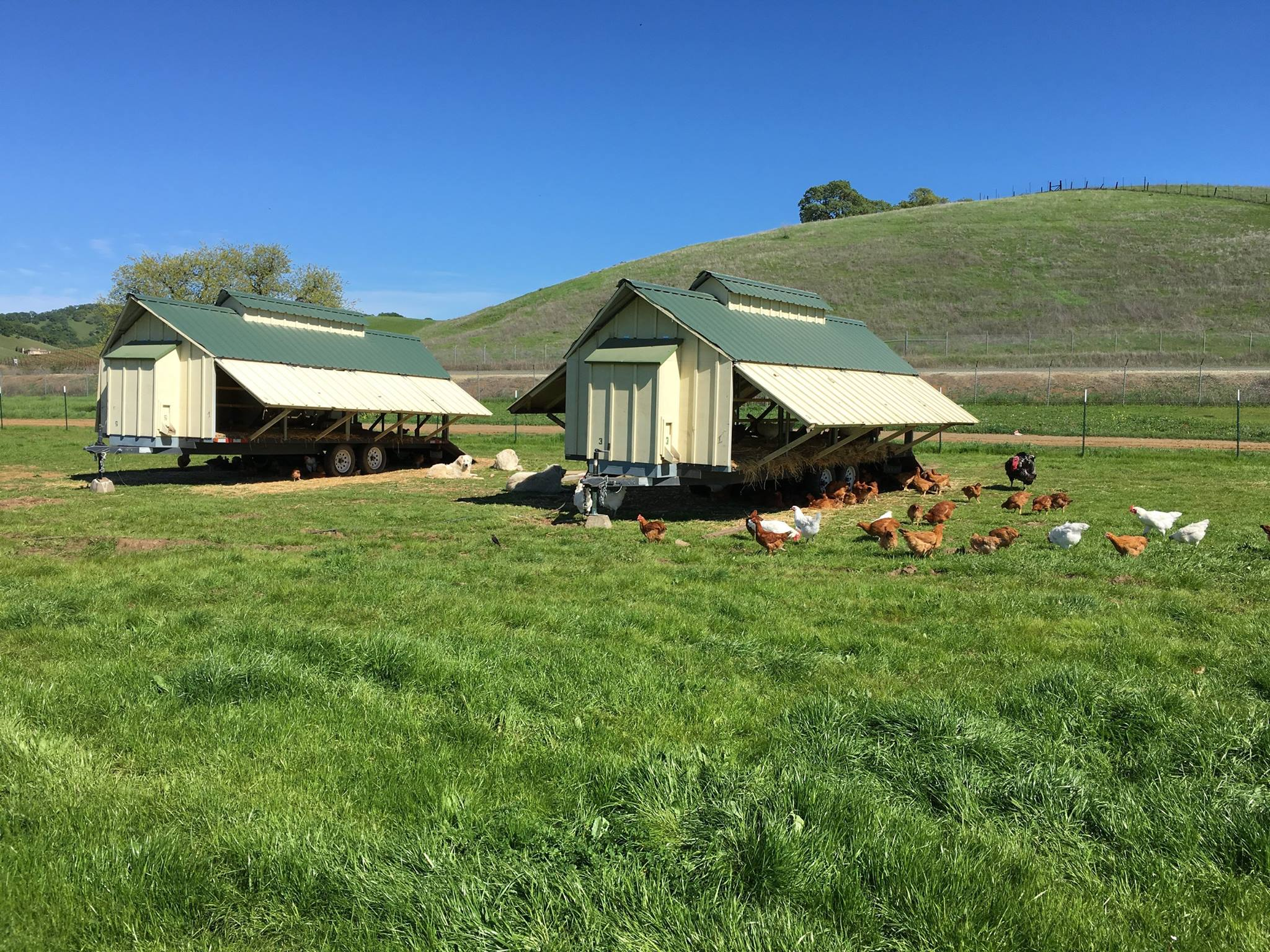 Pasture Coops
