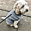Thumbnail: Dog Jumpers in Grey knit