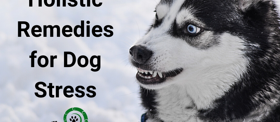 Signs Your Dog is Stressed and Natural Remedies You Can Use Today