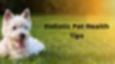 Holistic Pet Health Tips.png