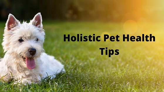 Holistic Pet Health Tips.png