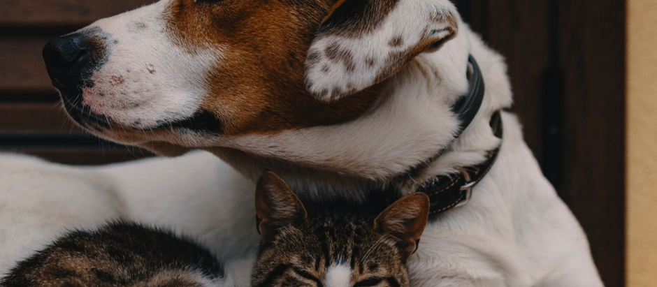Top tips to prevent cancer in your pet