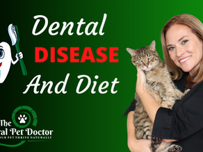 Dental Disease, Diet and Natural Remedies in Your Dog and Cat