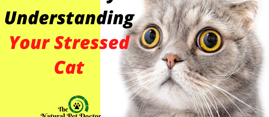 How to Help Your Stressed Cat with Natural Remedies