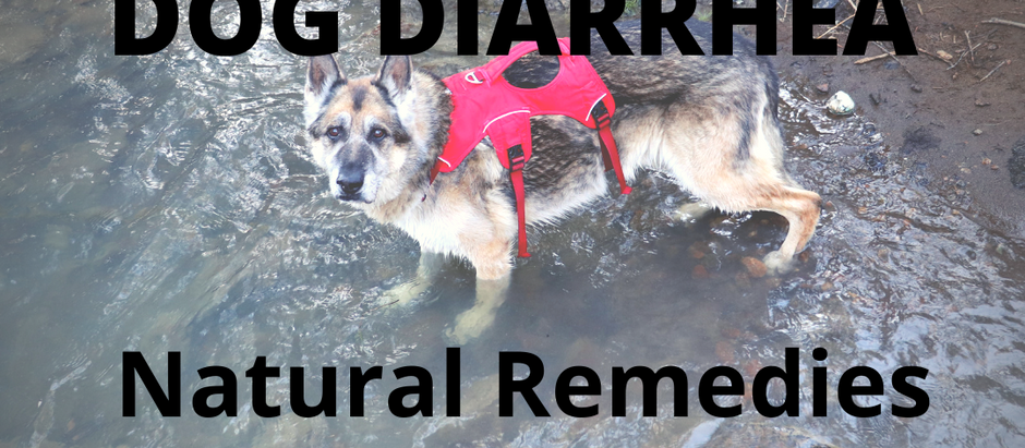 Dog Diarrhea - How to Help Your Dog with Natural Remedies