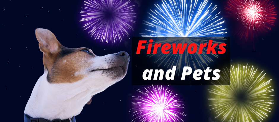 Fireworks and Pets: Top 6 Tips on How to Keep Your Pets Safe