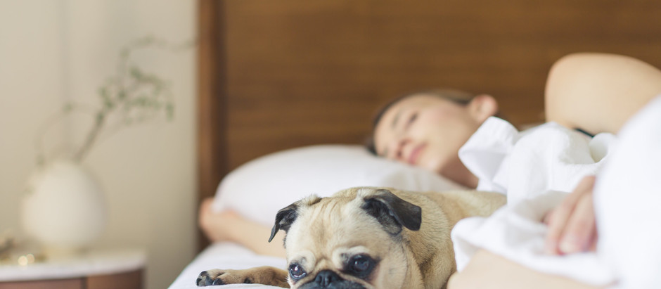 Top 3 Supplements for Cancer Prevention in Dogs