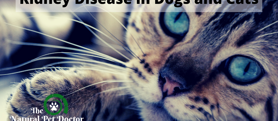 Managing Kidney Disease in Dogs and Cats with Natural Remedies