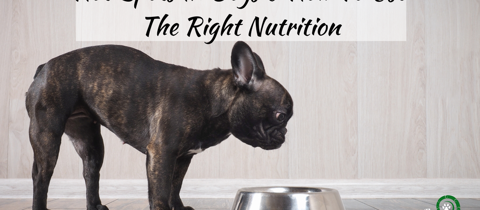 Hot Spots In Dogs And How To Use The Right Nutrition