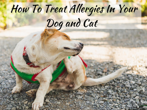 How To Treat Allergies In Your Dog and Cat
