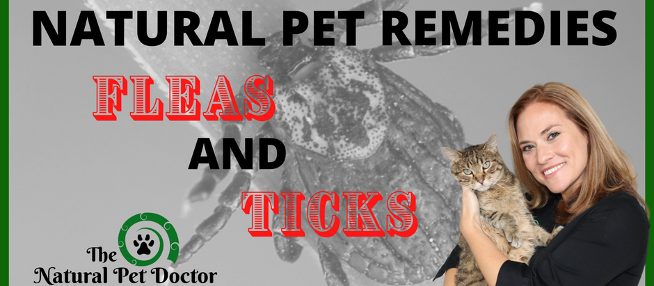Natural Remedies for Flea and Tick Prevention