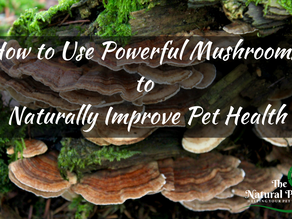 How to Use Powerful Mushrooms to Naturally Improve Pet Health