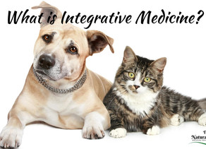 What Is Holistic Medicine For Dogs And Cats?