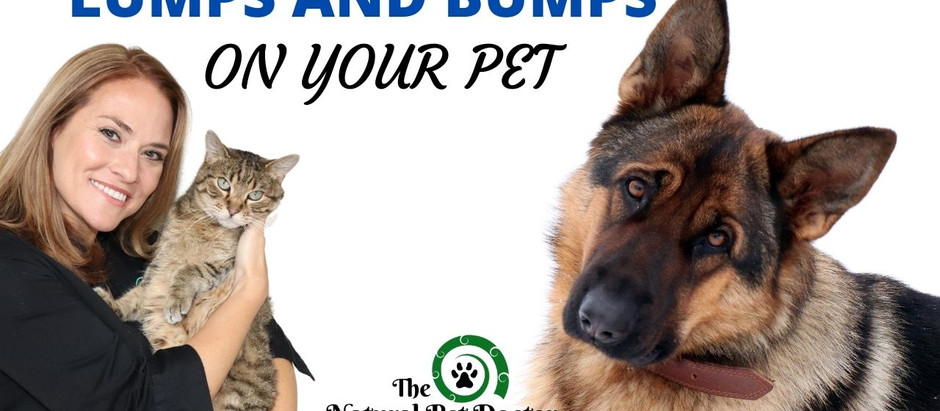 Skin Lumps and Bumps in Dogs and Cats - What You Need to Know
