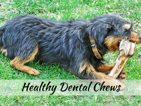 Natural Remedies for Your Dog & Cat's Bad Breath | Dental Chews