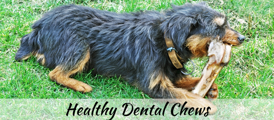 Natural Remedies for Your Dog & Cat's Bad Breath   Dental Chews