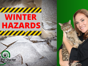 How To Keep Your Dogs and Cats Safe During Winter