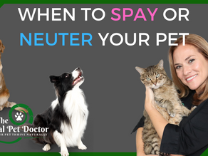When to Spay and Neuter Your Dogs and Cats