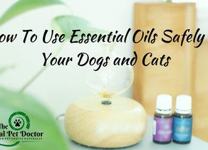 How To Use Essential Oils Safely In Your Dogs and Cats