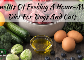 Benefits Of A Home-Made Diet for Dogs And Cats