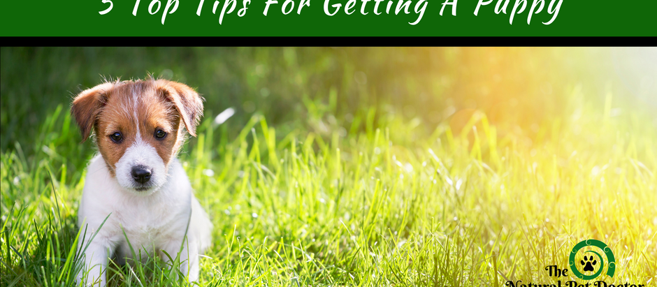 5 Top Tips For Getting A Puppy