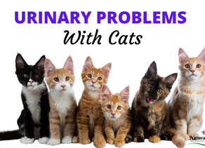 How To Help Your Cat With Urinary Problems
