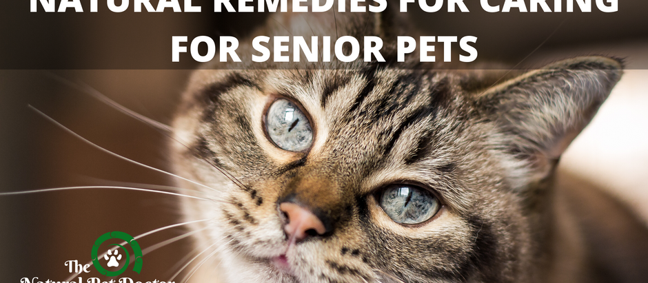 Natural Remedies for Caring for Senior Pets