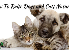 How To Raise Dogs and Cats Naturally