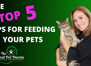 The Top 5 Tips For Feeding Your Dogs and Cats