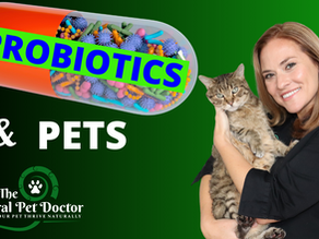 What You Need to Know About Probiotics For Your Dog and Cat's Health